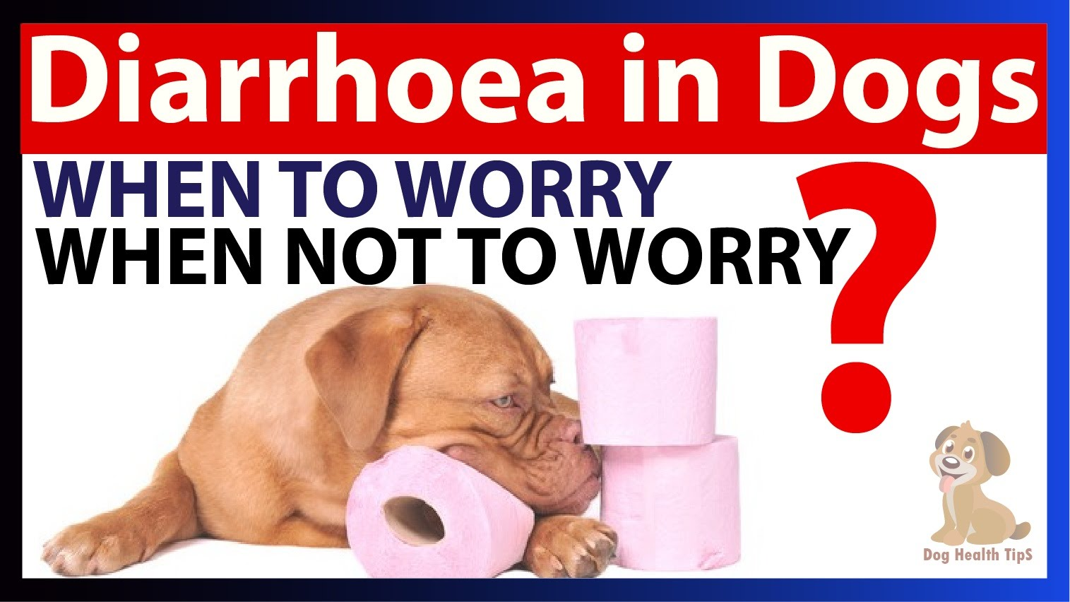 Can You Give Dogs Anything For Diarrhea
